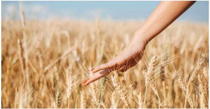 Tiesitkö nämä viisi luonnon tehoainetta ihollesi?