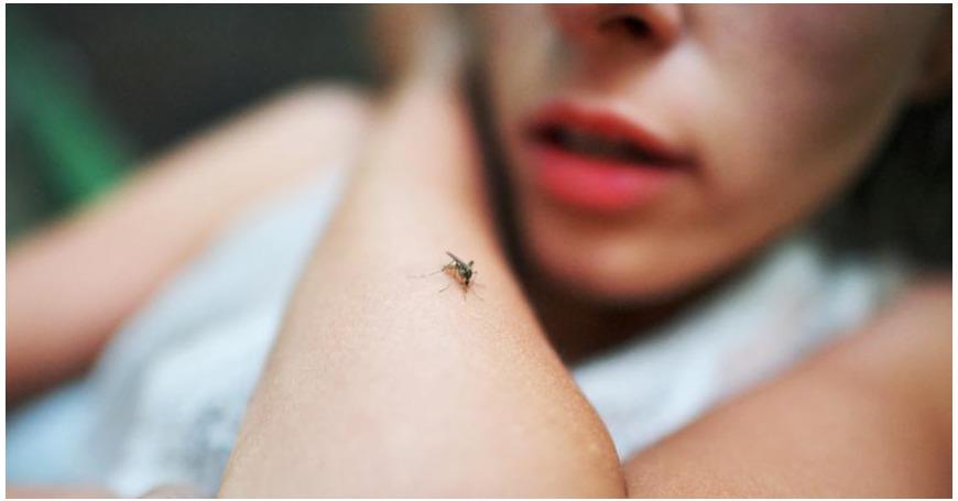 Paarma puri tai hyttysenpistosta jäi paukama? Näin hoidat hyönteisten puremat oikein